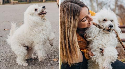 17 snabba lekar som din hund kommer att älska