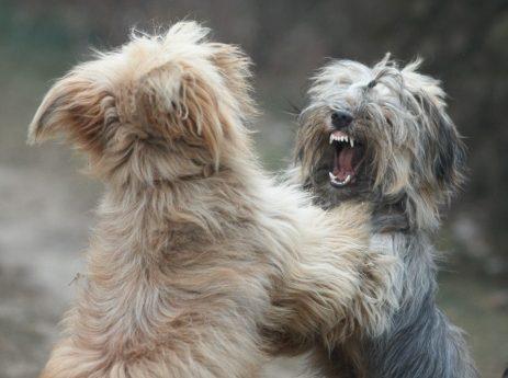 Undvik hundslagsmål