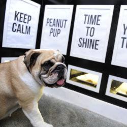 Bästa bageriet i London ... om hunden själv får välja. På Ciao Chow Canine Bakery i londonstadsdelen Soho får besökarna nosa sig fram till sina favoriter, som kexen Time to Shine för glänsande päls eller Yummy tummy för trög mage.