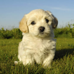 Skaffa hund? Vi listar fem sunda hundraser