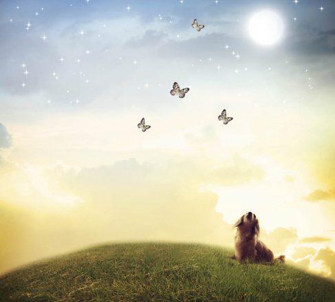 Hundhimlen