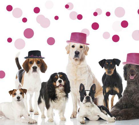 Så förbereder du din hund för nyårssmällarna