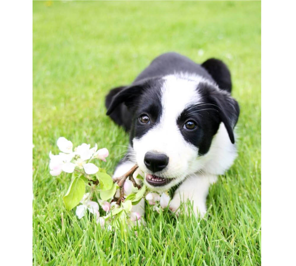 Bildresultat för hund vår