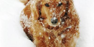 Så funkar hund i vinterbil
