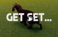 Crufts – världens största hundutställning
