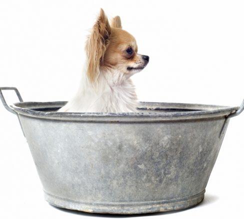6 råd när du ska bada din hund