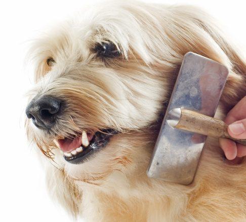 Hunden fäller – så funkar det