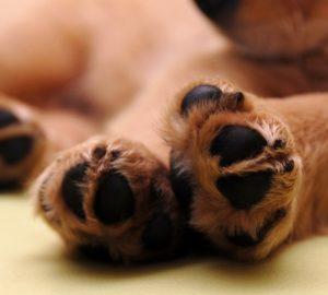 Söta hundtassar och fina klor i närbild-