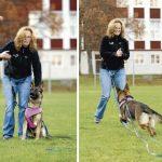 Friare hund med långlina