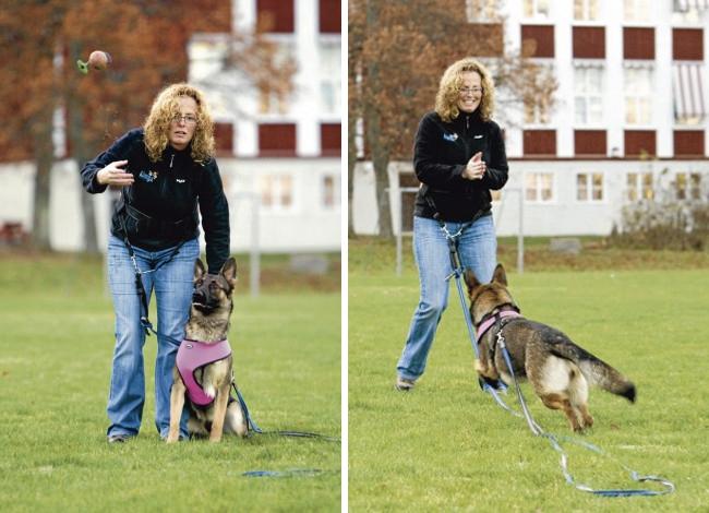 Släng kopplet och använd en lina! Då har du koll samtidigt som hunden har större frihet.