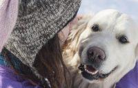 SNÄLL + STRÄNG – Är ni osams om hur hunden ska fostras?