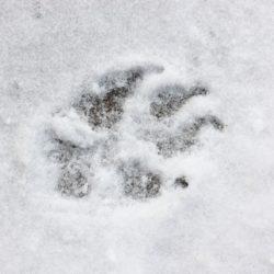 Vård för vintertassar
