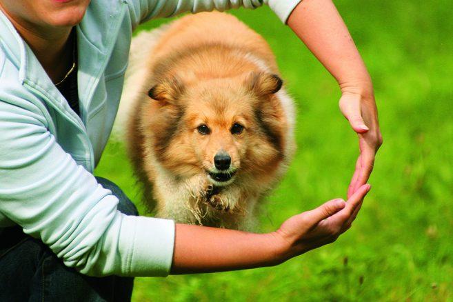 Trick – lär hunden hoppa genom armarna