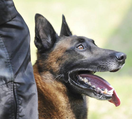 Världens första lögndetektorhund!