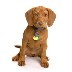 Vad ska lillen heta? Hanhundar får oftare traditionella hundnamn.