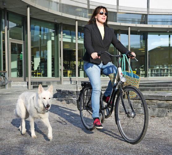 7 tips om du ska börja cykla med hunden