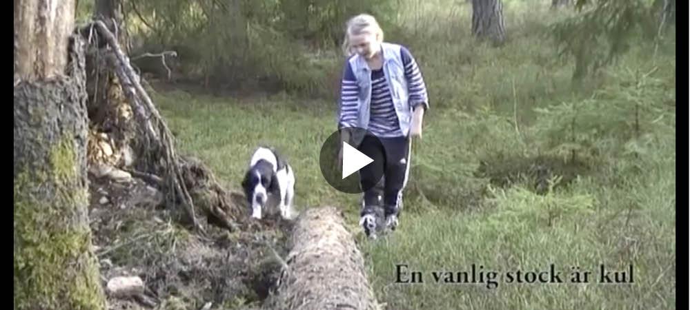 Film Hundskolan Kul på promenaden