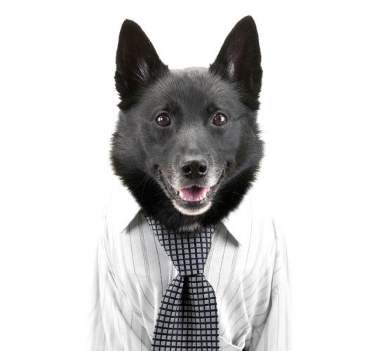 Modekläder på hundar