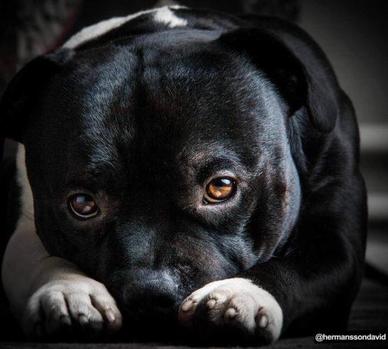 Din hund kan bli månadens sötnos!