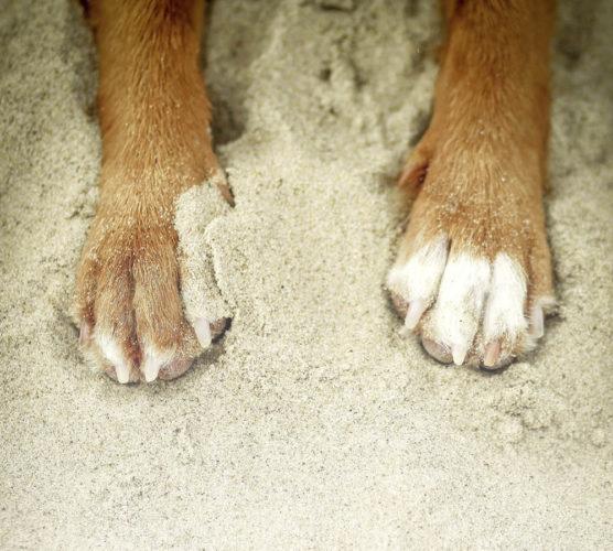 Vågar du flyga med din hund?