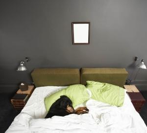8. Den bästa sängkamraten är din hund. Även om du själv får ligga lite på trekvarten.