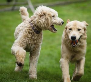 9. Du tar med vovsingen till en hundpark flera mil bort eftersom du har hört att just den är den bästa.