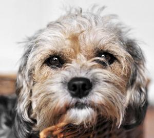 10. Din hund är din allra bästa vän och du kan inte ens tänka dig ett liv utan hund.
