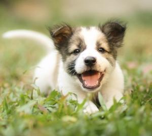 5. Din hund har fler smeknamn än både en genomsnittlig treårig människounge och ett nyförälskat par.