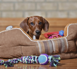 6. Hunden i ditt liv har givetvis en bädd i varje rum i ert hem. Minst.