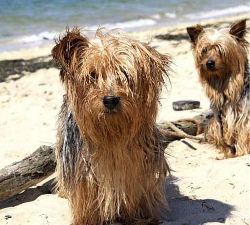 Här kan du bada med din hund