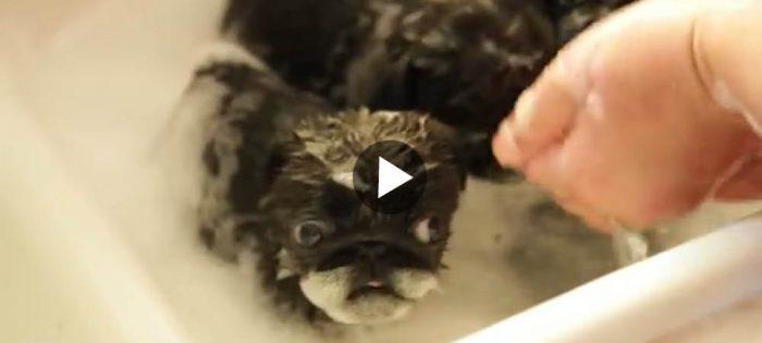 Mopsa inte upp dig i badet