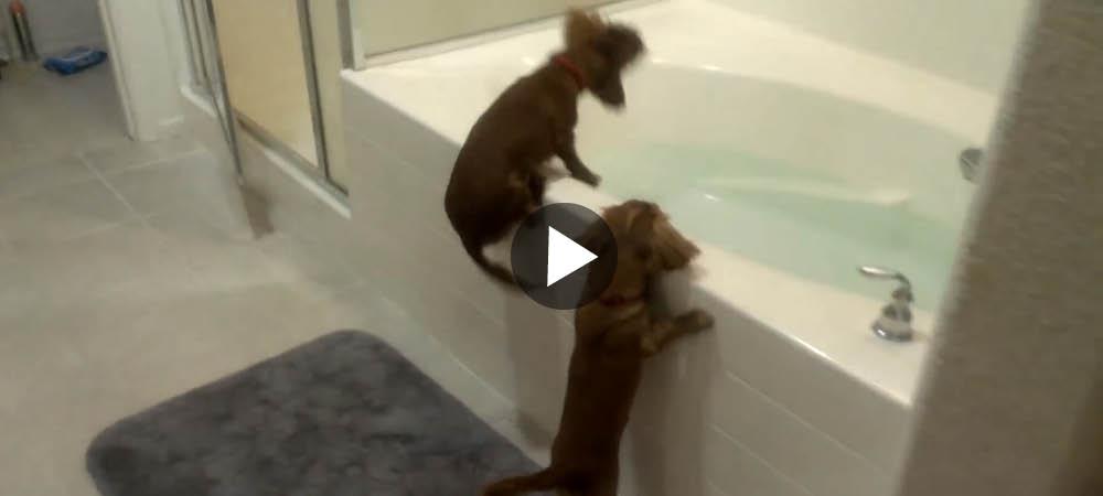Vi vill bada – nu!