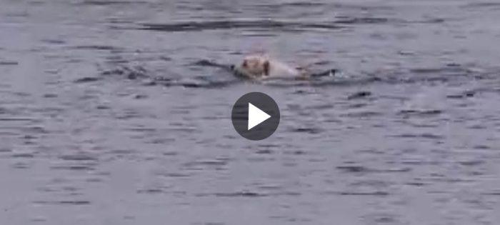 Lycka är att simma med delfiner