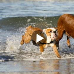 Film hundens språk_NY