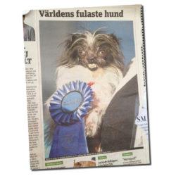 Taskigt att tävla om fulaste hunden?
