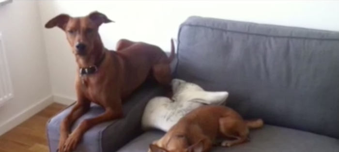 Film: Orden alla hundar kan