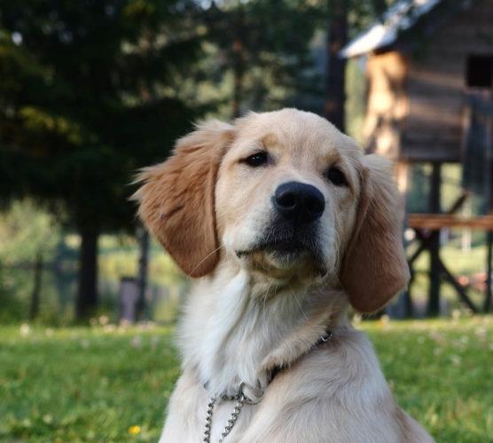 Din hund kan bli månadens sötnos