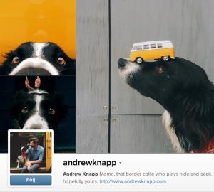 """andrewknapp Border collien Momo blev känd när Andrew Knapp la upp bilder där man skulle hitta Momo i bilden, med amerikanska barnboken """"Where's Waldo?"""" där man ska hitta en hund i en bild, som förlaga. Helt fantastiska bilder med Momo och Andrew."""