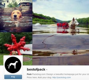 bestofpack Det här är ett onlineforum där hundägare lägger upp bilder på sina fyrbenta vänner.