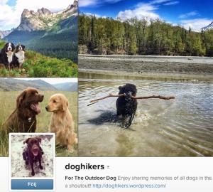 doghikers Här är Instagram-kontot för dig som älskar inte bara hundar, utan även ett aktivt utomhusliv. Förutom härliga och glada hundar kan du även se otroliga miljöer på köpet. Rekommenderas!