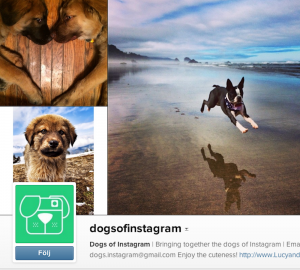 dogsofinstagram Här visas sötnosar från hela världen när de leker, badar eller bara njuter av livet.