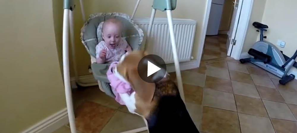 Den här vovven stjäl bebisens snuttefilt … och du måste se vad som händer sen