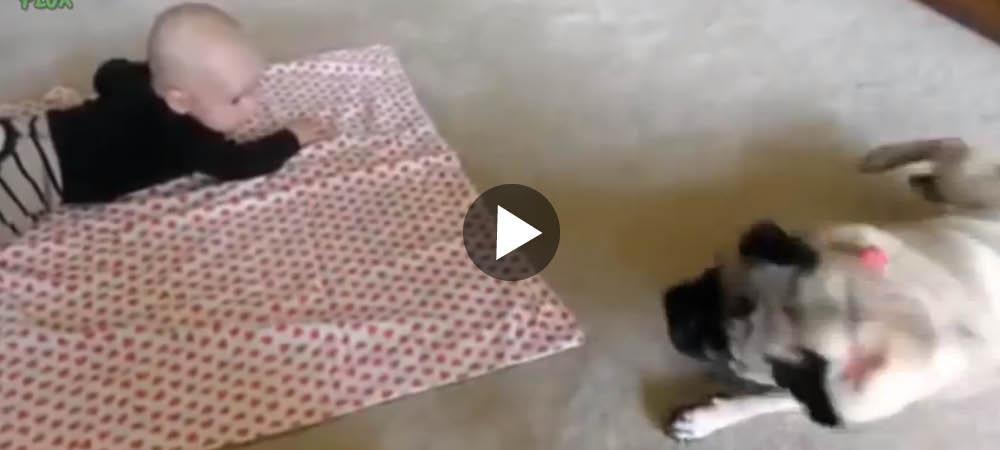 Hundar lär bebisar sina trick