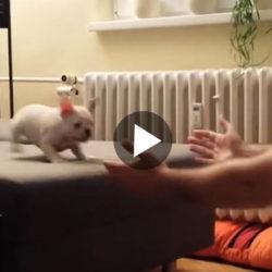 Film fransk bulldogg