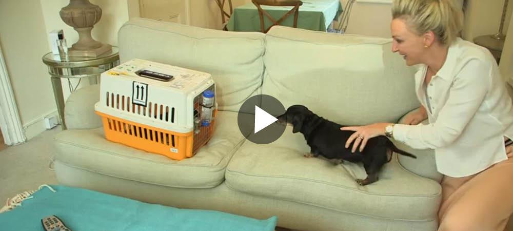 Möt Winnie - Storbritanniens första klonade hund