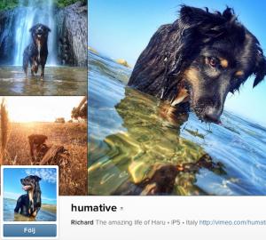 humative Bilderna och videoklippen från vovven Harus liv är magiska! Han älskar att leka i vatten och bilderna är makalöst fina.