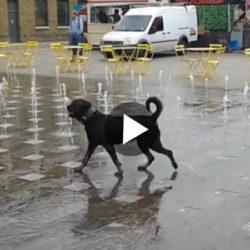 DOG_WATER