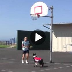 Film basket hund