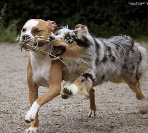 Gå på hundkurs