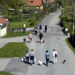 Från City Walk med Dogcamp tidigare i år.
